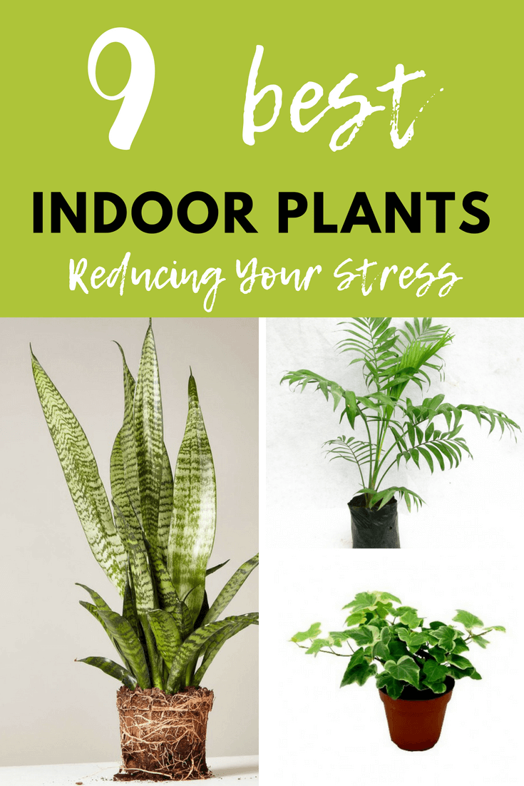 There are simple ways to relieve stress at home. Choosing a variety of houseplants can cleanse the air of toxic chemicals. You can definitely relax better with cleaner air and green foliage around your home.