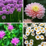 Top 9 Flowers That Repel Insects