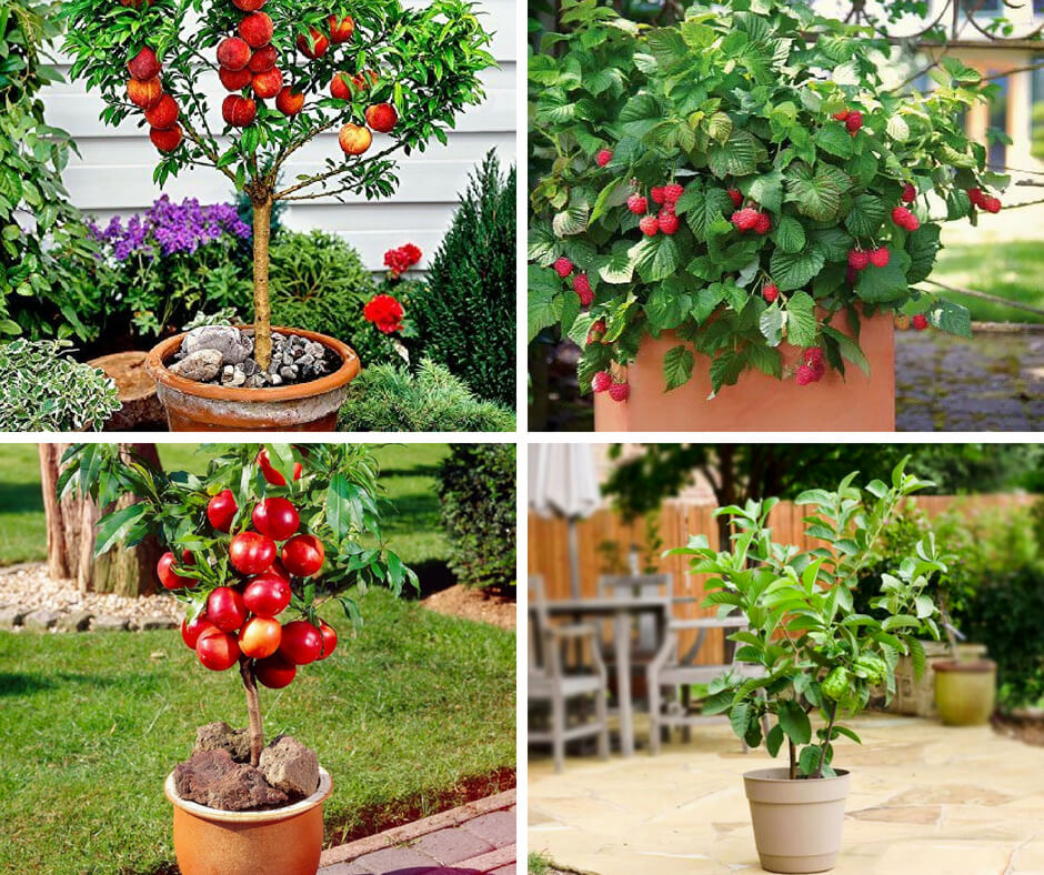 Fruits Grow In Pot