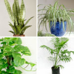 9 Best Indoor Plants Reducing Your Stress