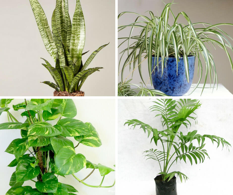 Indoor Plants Reduce Stress