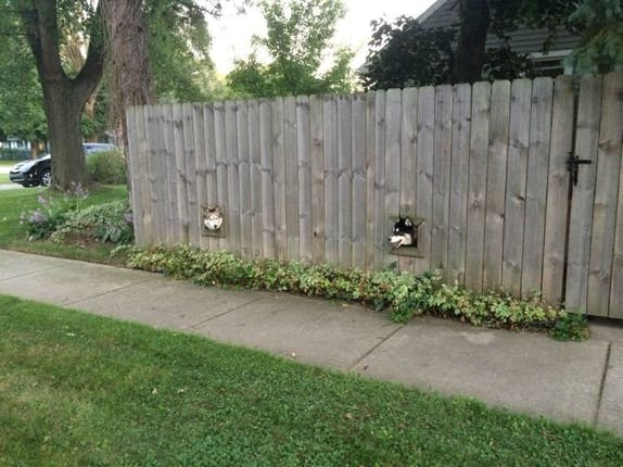 Fence Portholes