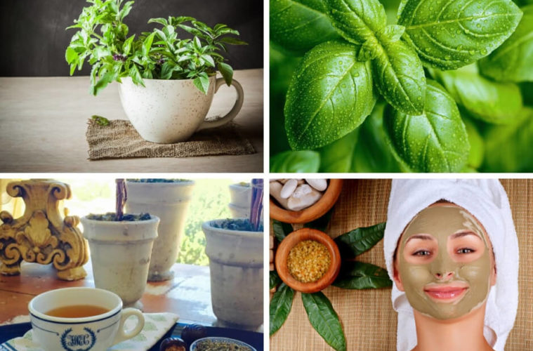 Medical Benefits of Basil: A Medicinal Herb that Works Wonders