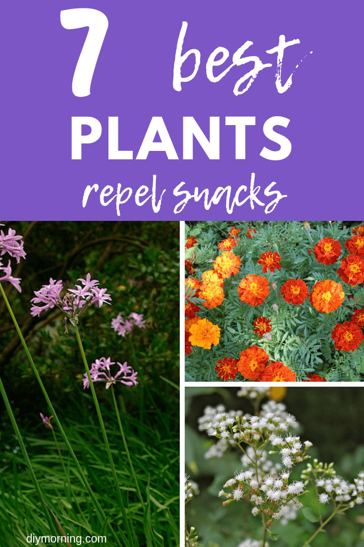 Best Plants Repel Snakes