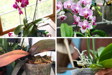 Orchid Plants: A Beginner's Guide to Growing and Caring for Orchids