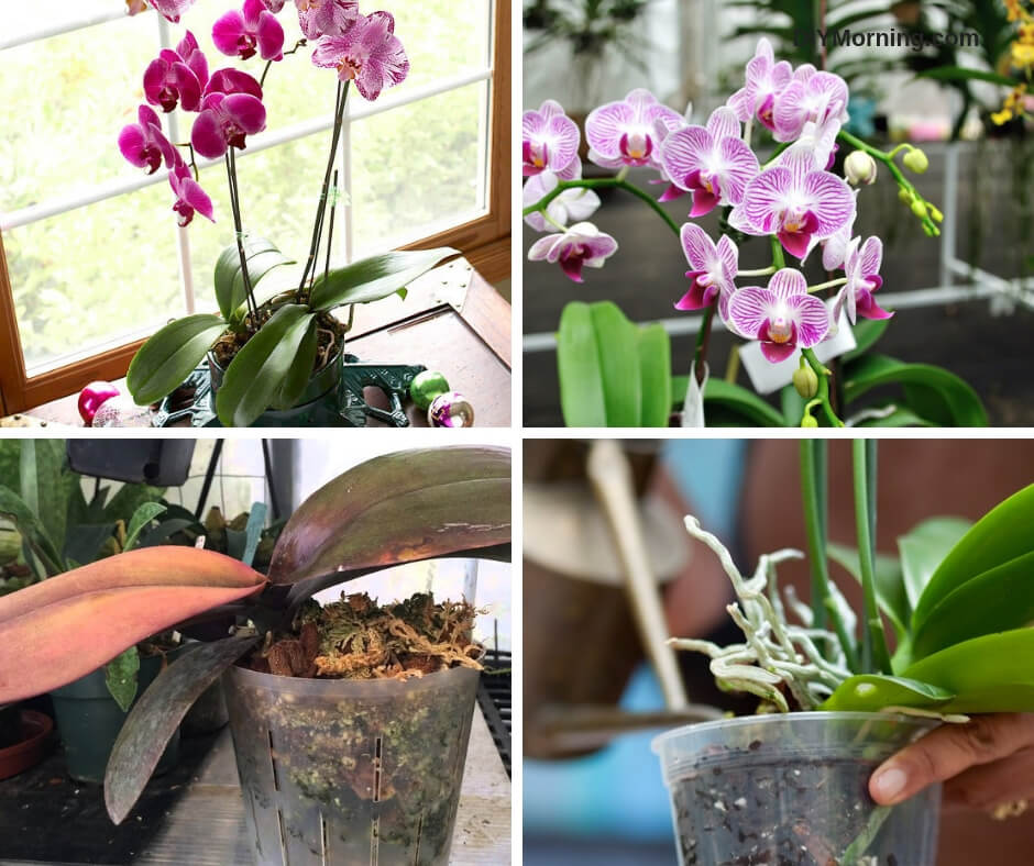A Beginner's Guide to Growing and Caring for Orchids
