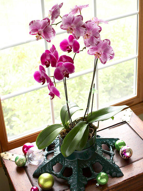 Growing Orchids at Indoor Temperatures