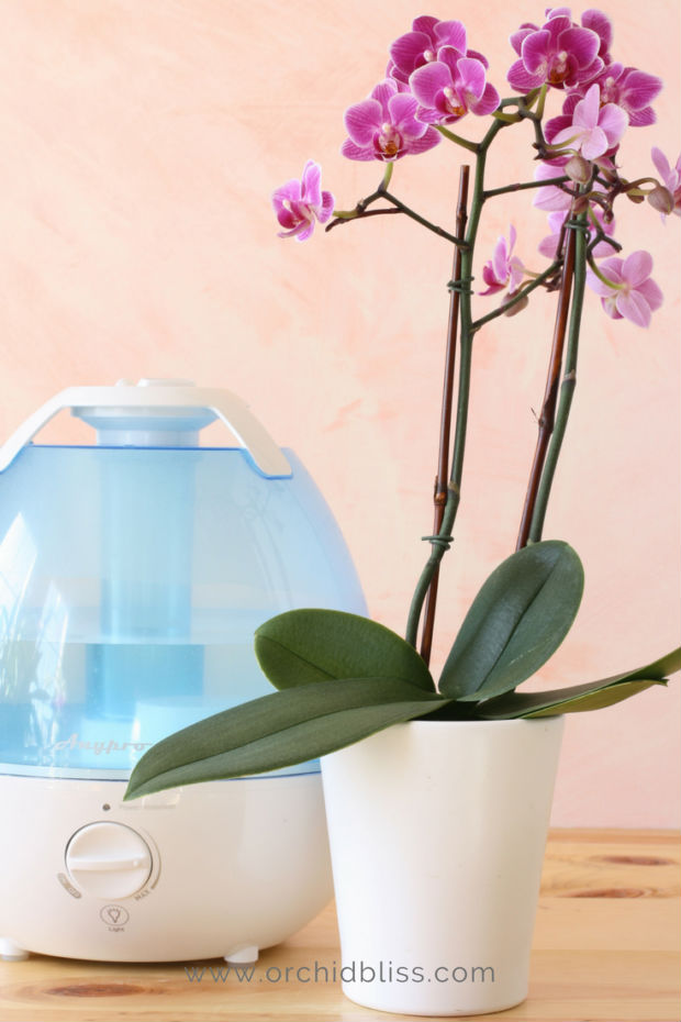 Humidifer for orchids