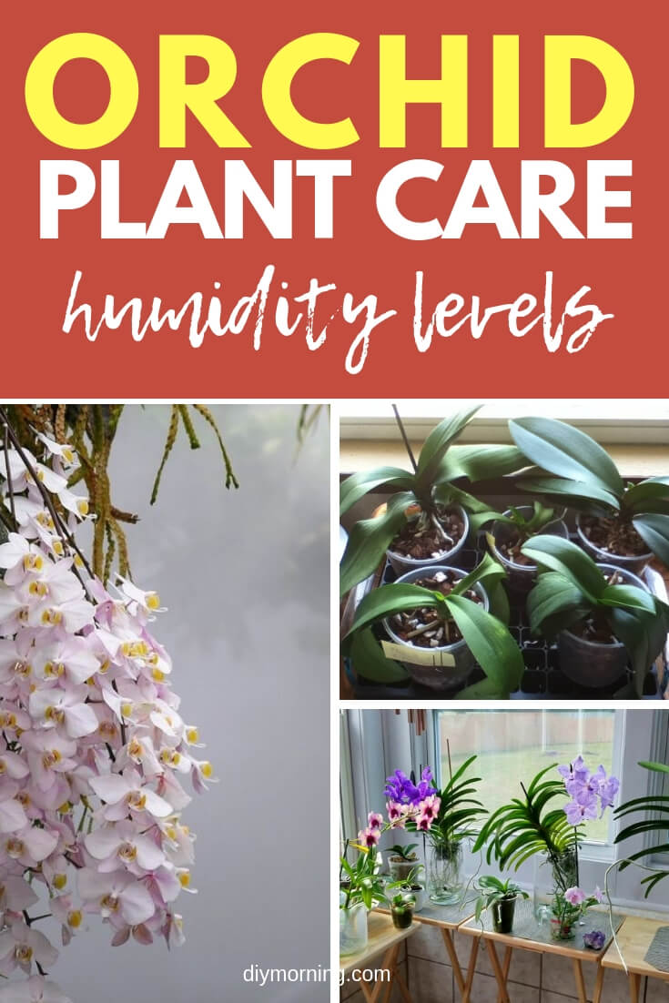 The specific humidity level an orchid needs depends on the type of plant, but here are general guidelines to optimize the health of your plant and coax it to flower.