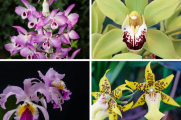 Orchid Plant Care Guide For Beginners