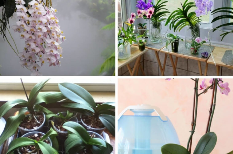 Orchid plant care humidity levels