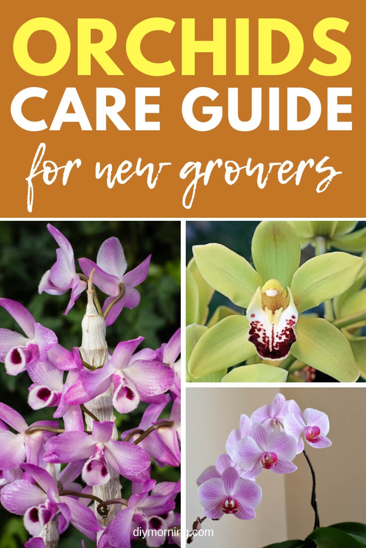 Orchids plant care guide for beginners