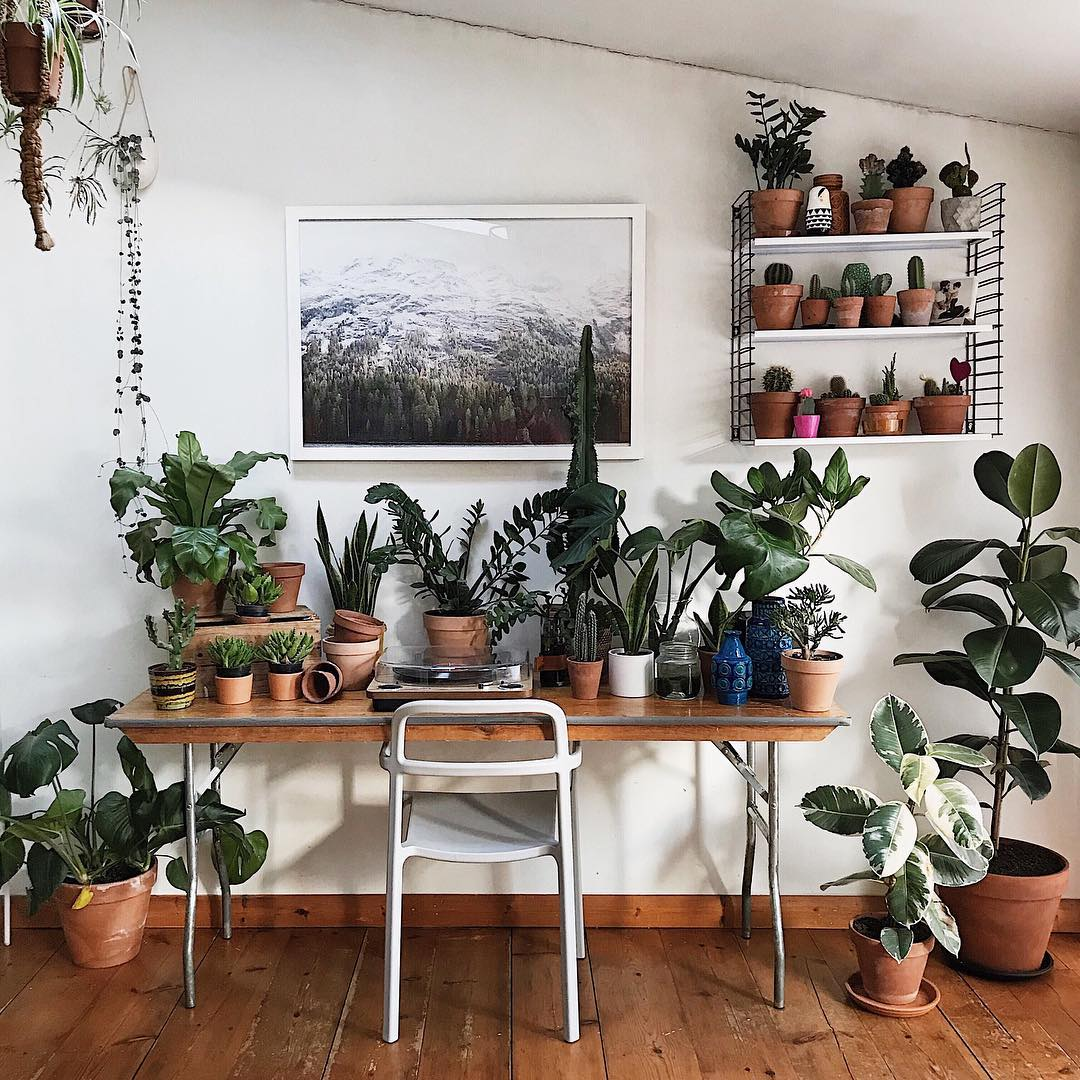 Room decorated with plants of different types that are distributed between the desk, the wall and the floor