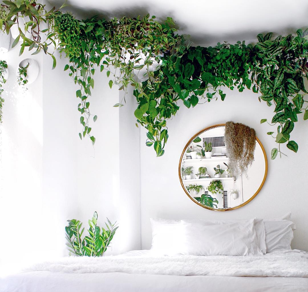 Room with green plants that decorate around the ceiling while hanging and reflected in a round mirror