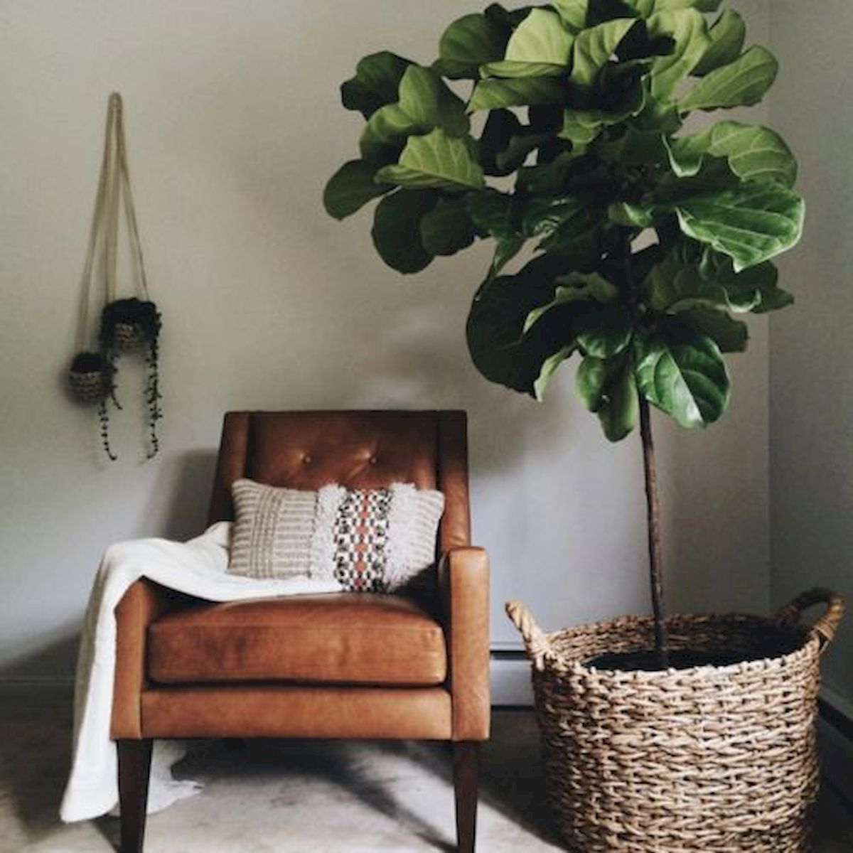 Armchair that is in the middle of a living room in which there is a large plant inside a palm basket