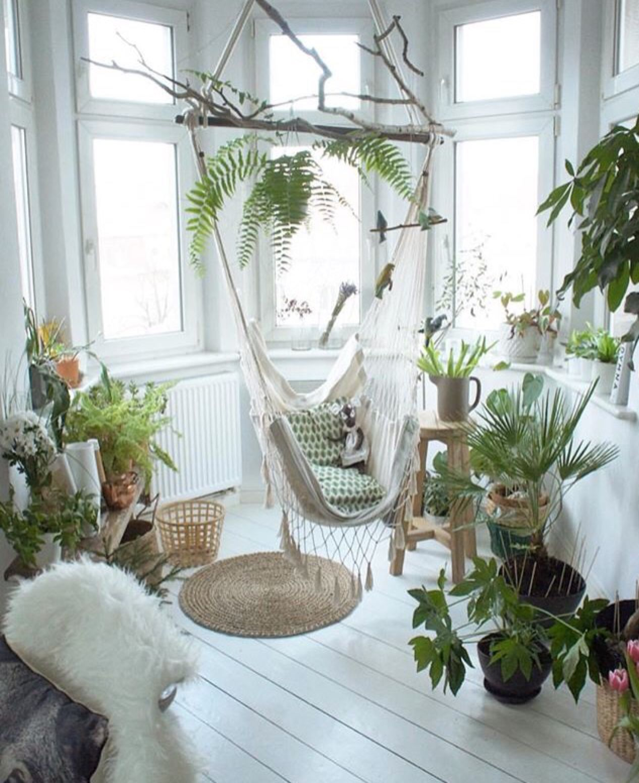 Rest room with a hammock in the center, a rug, cushions and plants around different types