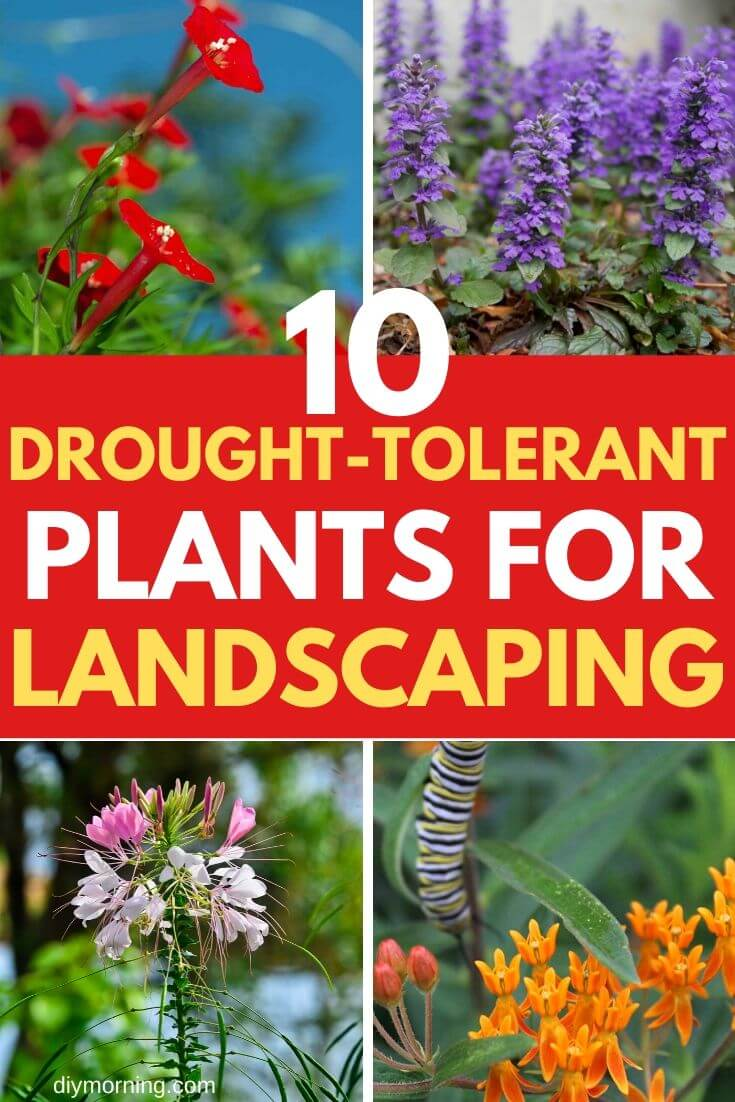10 Heat and Drought Tolerant Plants for Landscaping