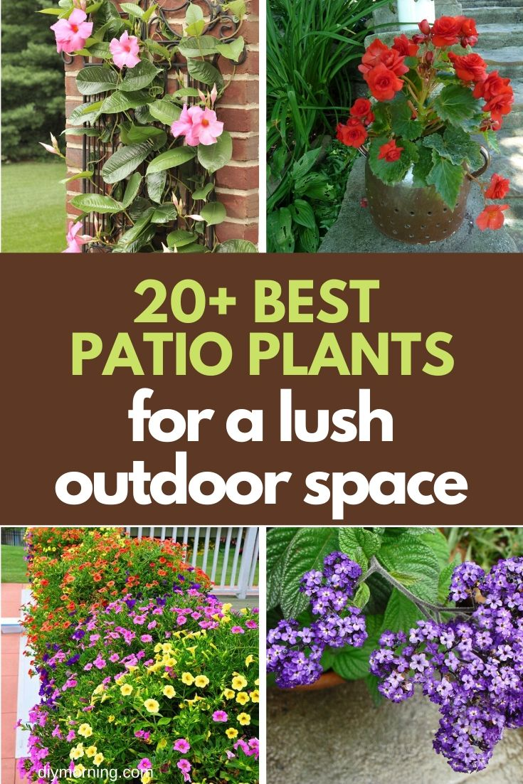 20 Beautiful Patio Plant Ideas For A Lush Outdoor Space Diy Morning
