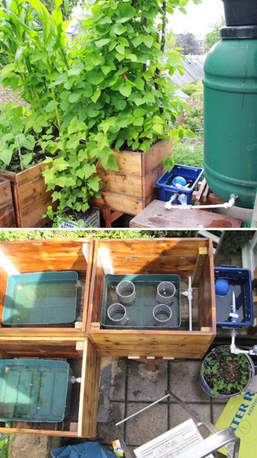 Self watering growing system