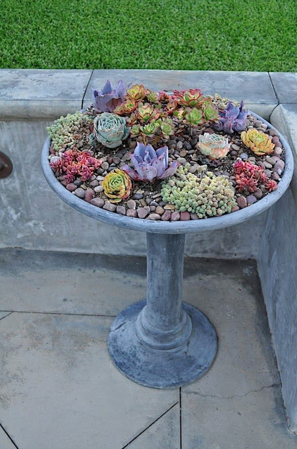 Best Succulent Garden Ideas #1