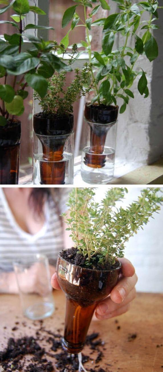 Self watering Bottle garden