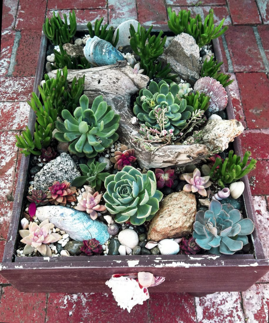 Best Succulent Garden Ideas #10
