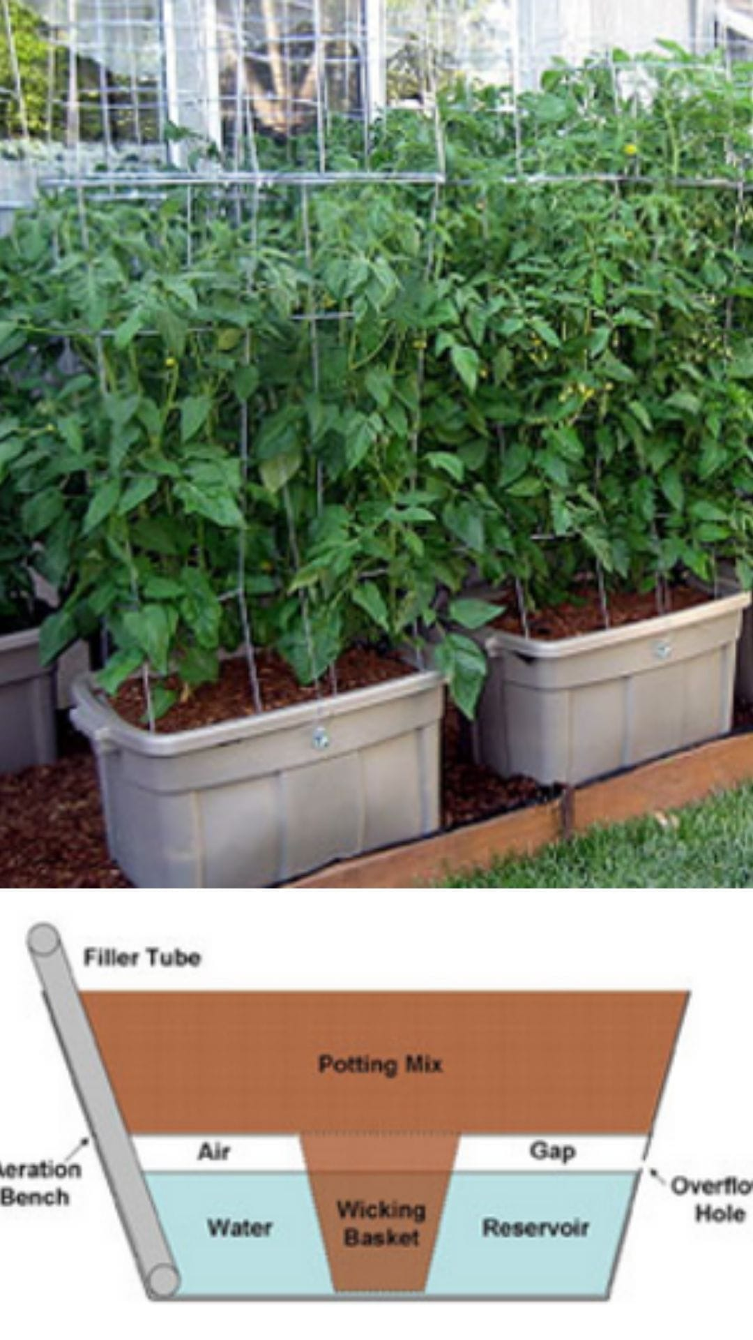 Self watering tomato planters from storage boxes
