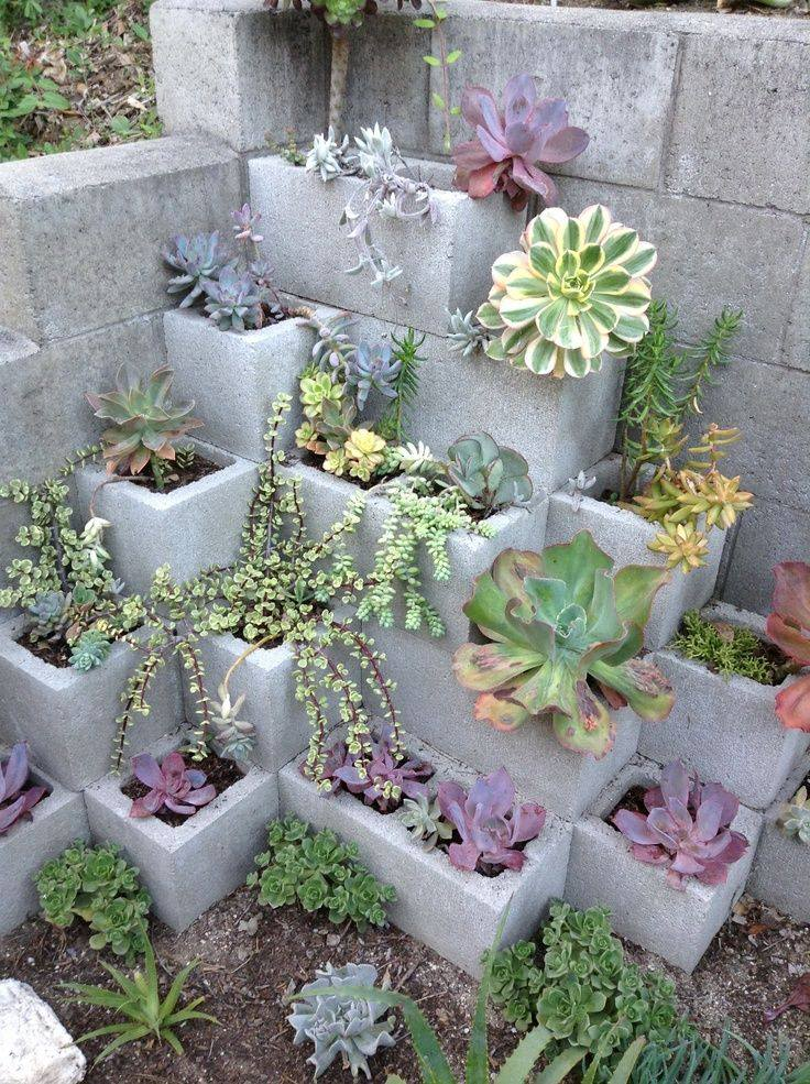 Best Succulent Garden Ideas #14