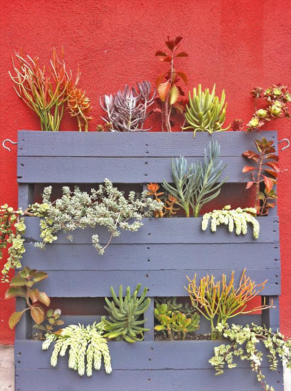 Best Succulent Garden Ideas #15