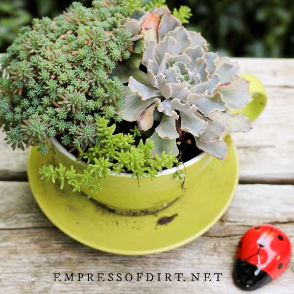 Best Succulent Garden Ideas #18