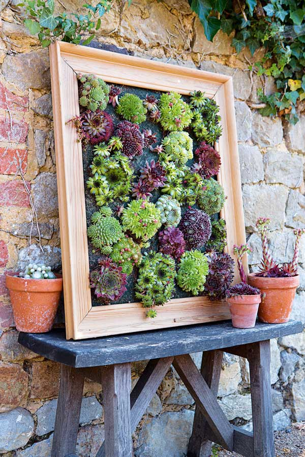 Best Succulent Garden Ideas #19