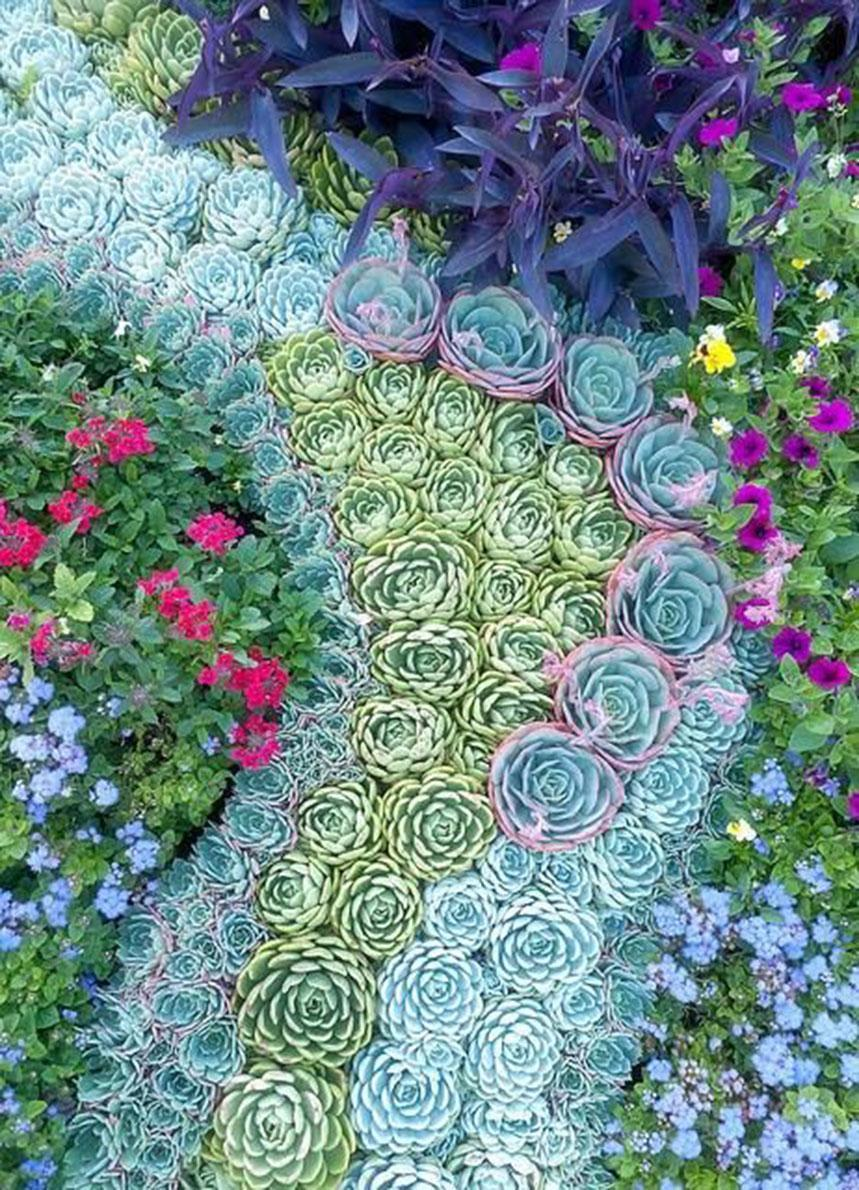 Best Succulent Garden Ideas #2