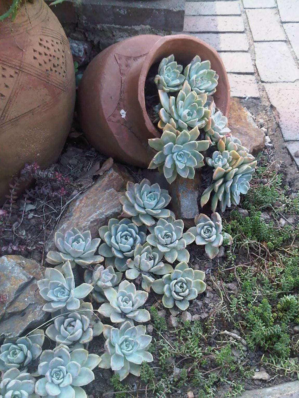Best Succulent Garden Ideas #21
