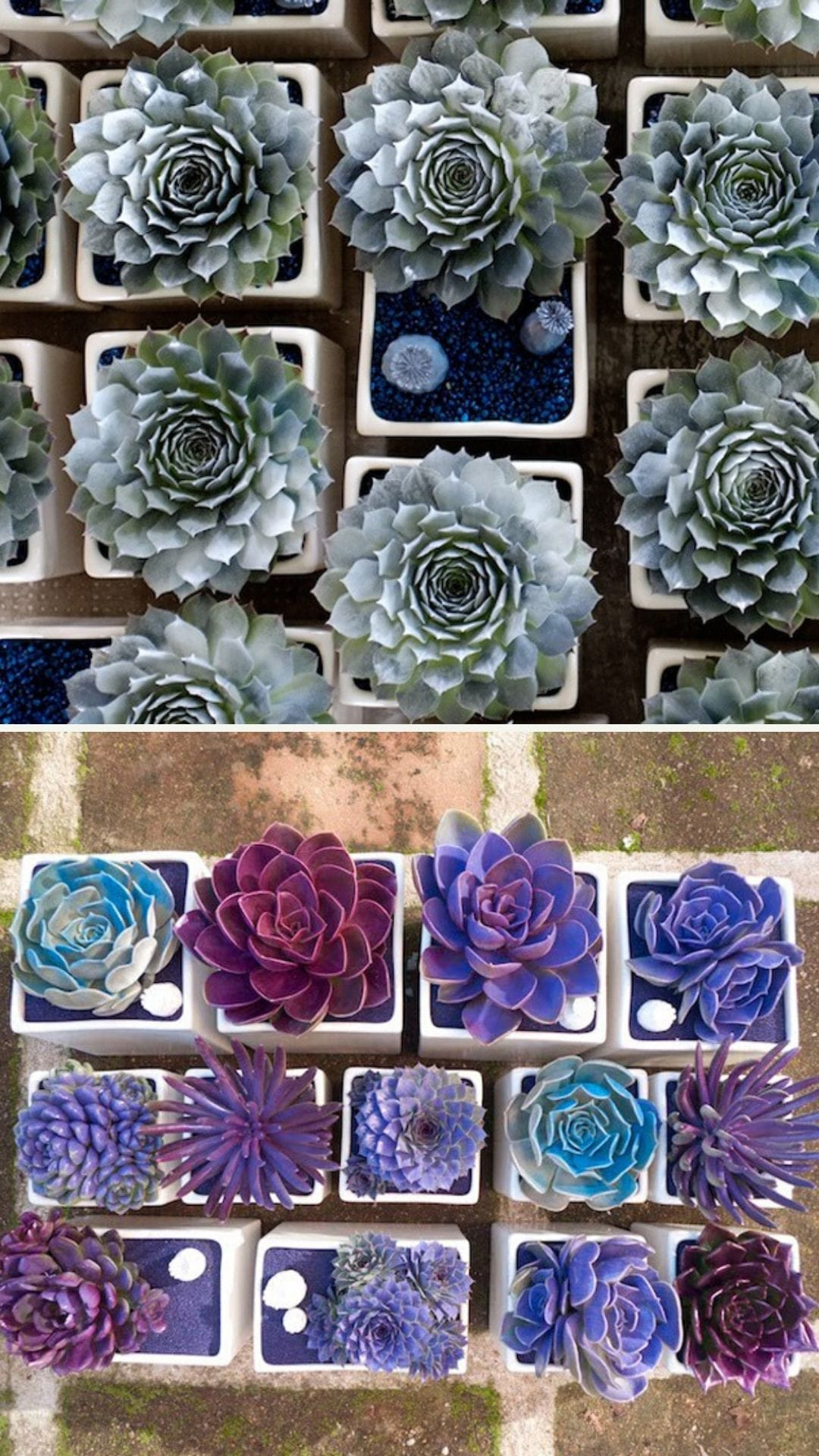 Best Succulent Garden Ideas #23