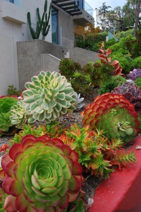 Best Succulent Garden Ideas #24