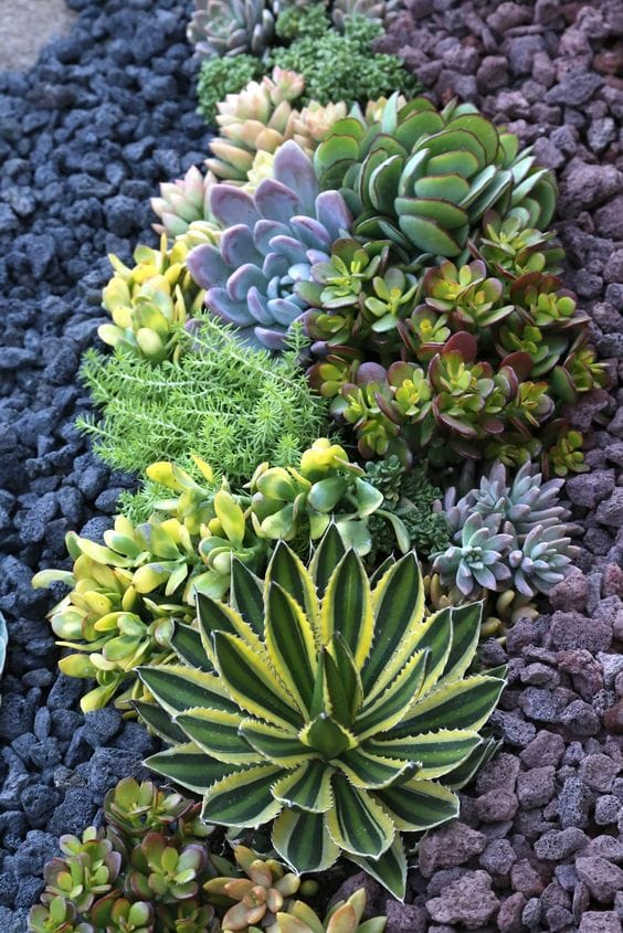 Best Succulent Garden Ideas #25