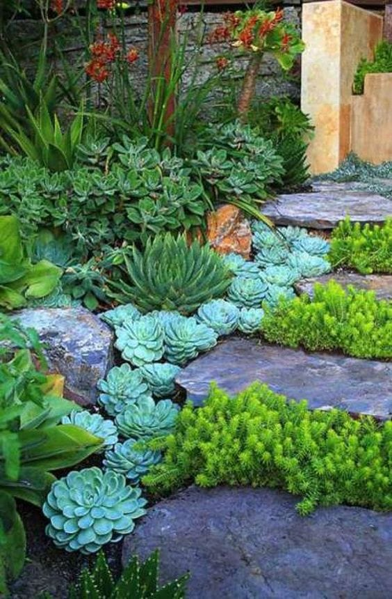 Best Succulent Garden Ideas #26