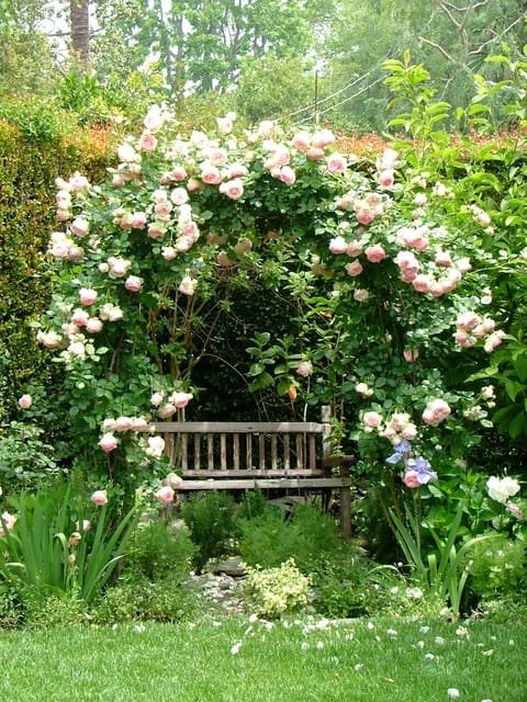 Best cottage style garden ideas for landscaping #37