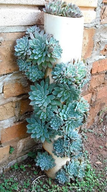 Best Succulent Garden Ideas #5