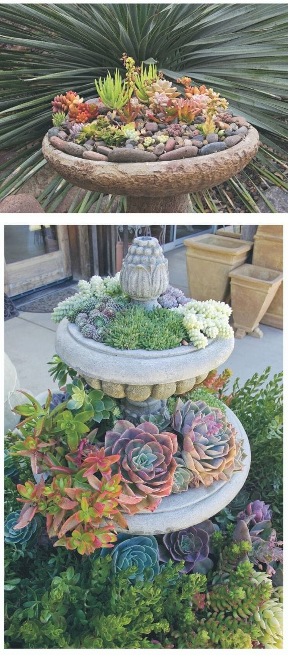 Best Succulent Garden Ideas #7