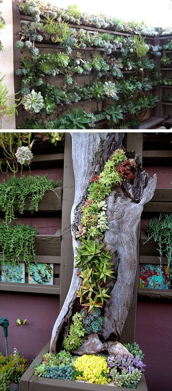 Best Succulent Garden Ideas #8