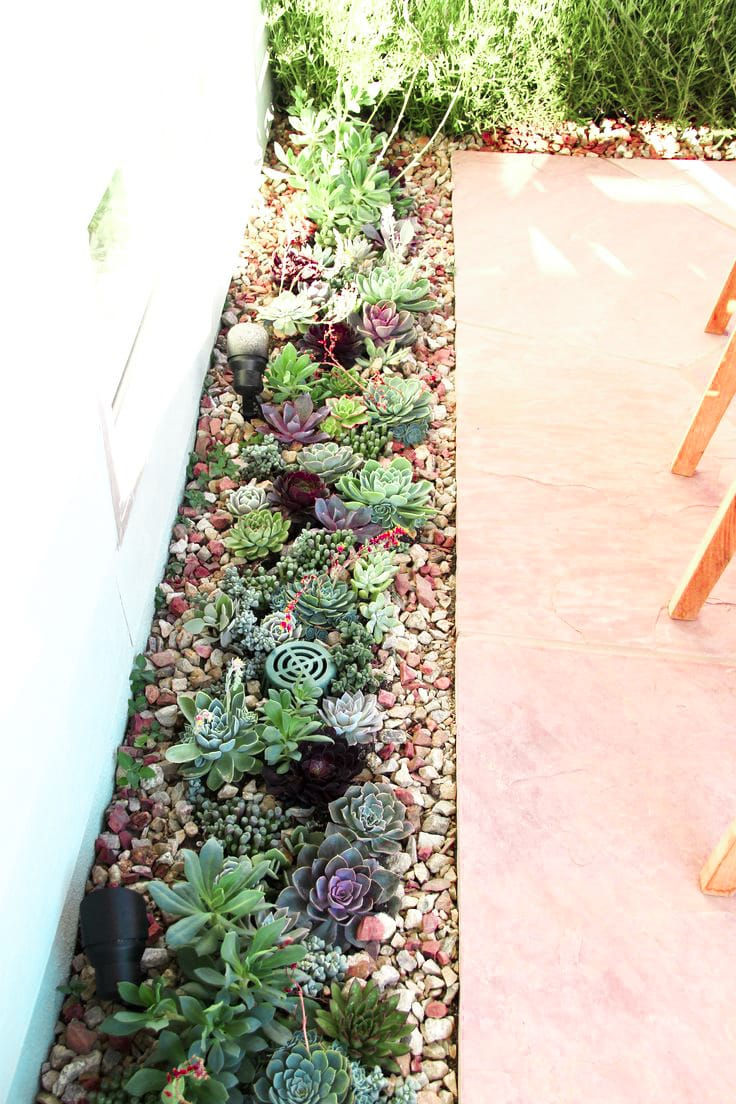 Best Succulent Garden Ideas #9