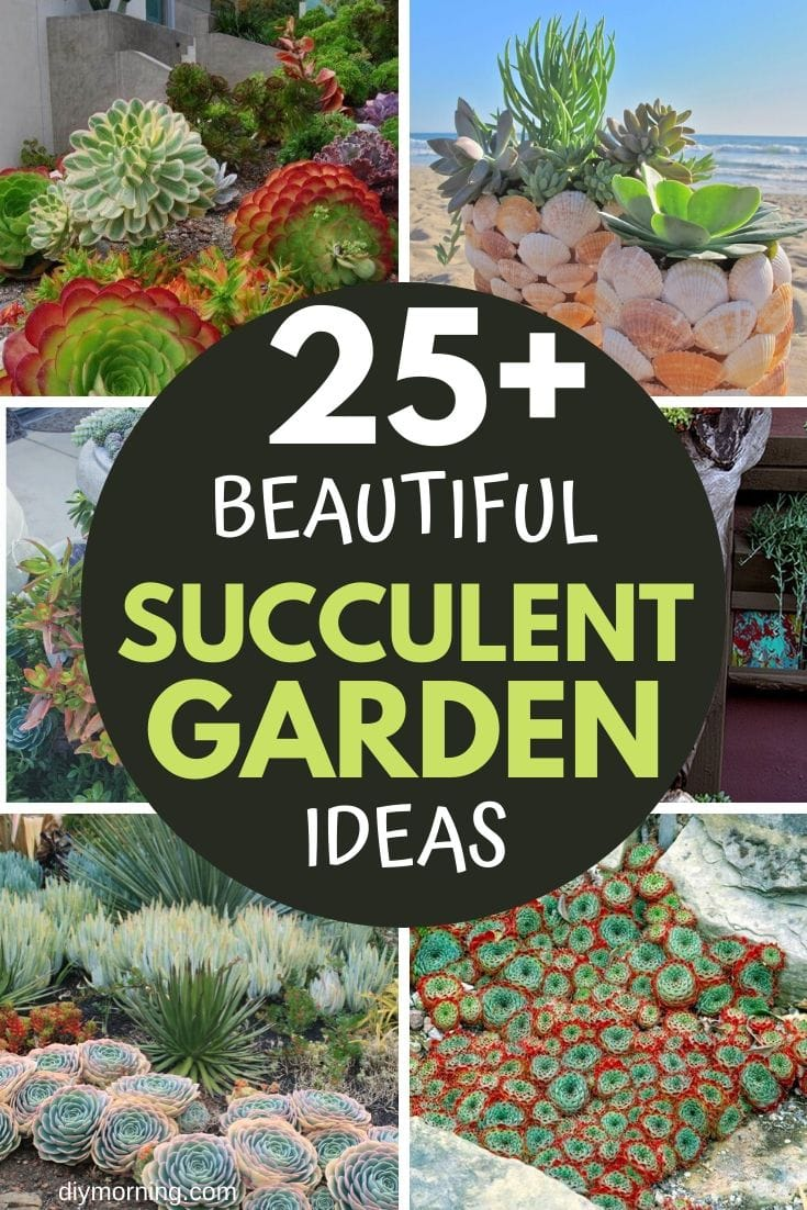 cheap succulent garden ideas