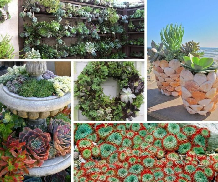 best succulent garden ideas